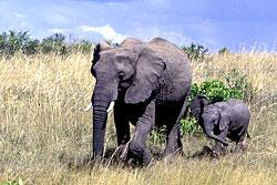 Кения, туры в Кению